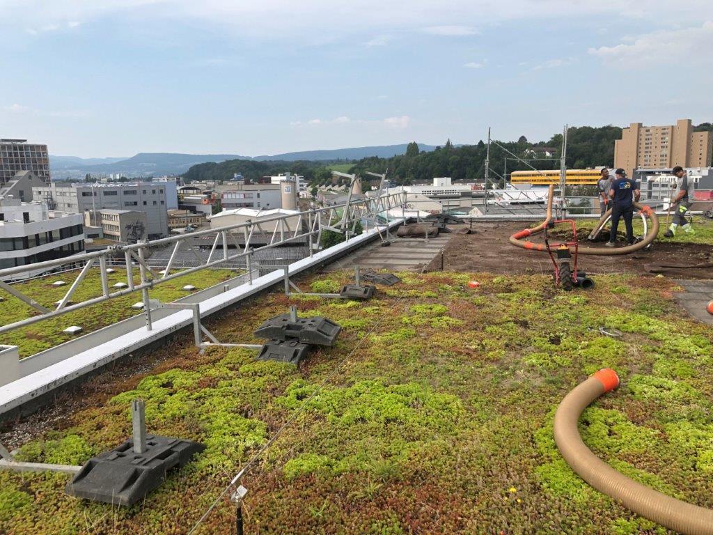 Unser Herzensprojekt auf den Dächern Basels
